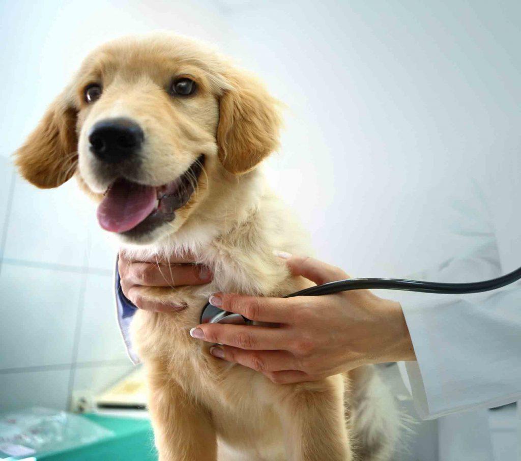 Veterinary Internal Medicine