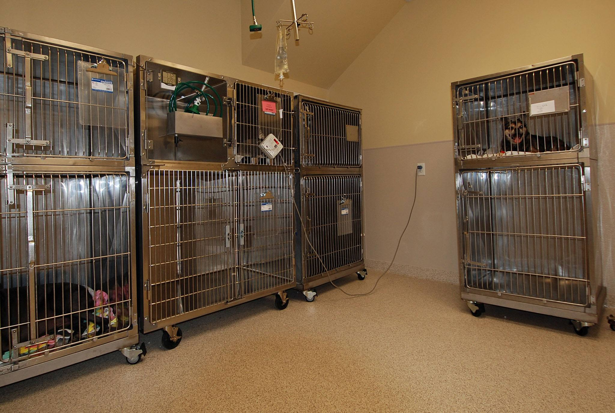 Patient Recovery Suite - Houston, TX - Oak Forest Veterinary Hospital